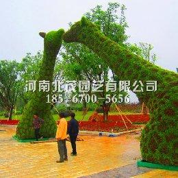 湖北植物绿雕长颈鹿