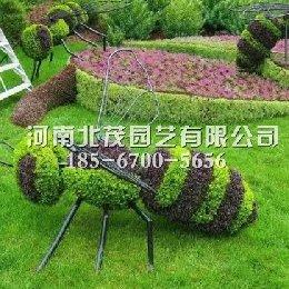 开封植物绿雕蚂蚁